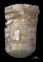 Orthoceras sp., ELM G1:2064