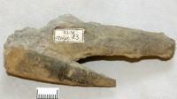 Hyolithes acutus Eichwald, ELM G1:83