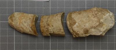 Beloitoceras heterocurvatum, ELM G5:16