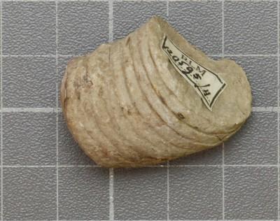 Beloitoceras heterocurvatum, ELM G5:4