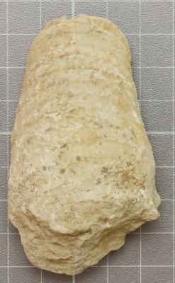 Beloitoceras heterocurvatum, ELM G5:7