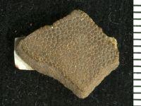 Pteraspidomorphi