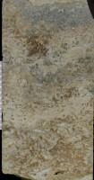 Dasyporella sp., GIT 156-1171