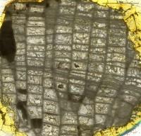 Favosites gothlandicus Lamarck, 1816, GIT 180-511