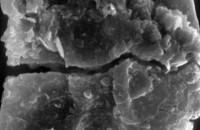 <i>Ancyrochitina sp.</i><br />Ventspils D-3 borehole, 815.00 m, Adavere Stage