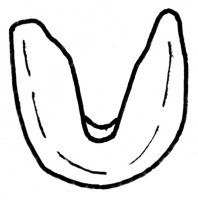 Paraconodonta