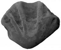 Agnatha incertae sedis
