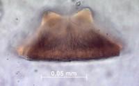 Palaeoscolecida