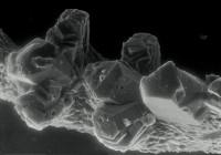 Icriognathus cornutus Männik, 1992, GIT 252-5