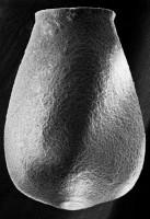 <i>Eisenackitina lagena (Eisenack, 1968)</i><br />Ruhnu 500 borehole, 361.90 m, Jaagarahu Stage