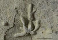 Chondrites sp., GIT 362-254
