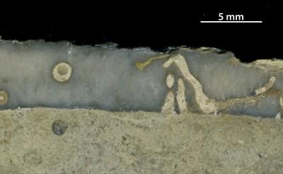 Trypanites sp., GIT 362-266