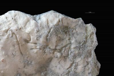 Sulcichnus isp., GIT 362-551-1