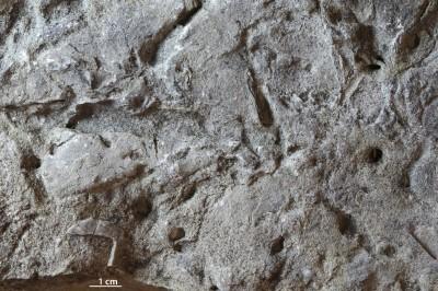 Arenicolites isp., GIT 362-560