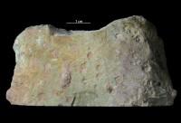 Trypanites isp., GIT 362-64