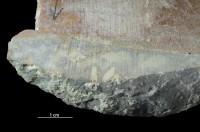 Trypanites isp., GIT 362-66