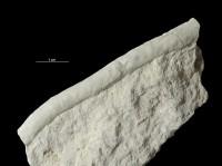Palaeophycus isp., GIT 362-69