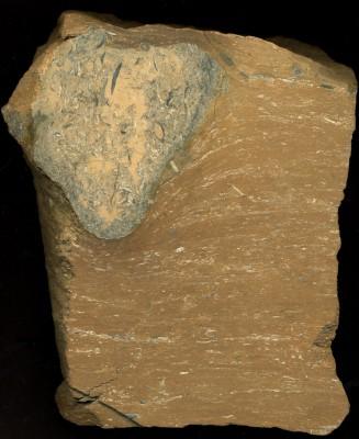 Ichnofossils