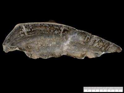 Favosites sp., GIT 398-326