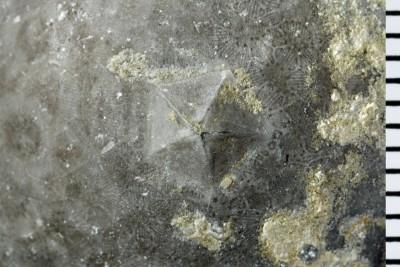 Echinosphaerites aurantium (Gyllenhaal, 1772), GIT 398-345