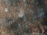 Echinosphaerites pirum Jaekel, 1918, GIT 631-81