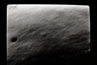 <i>Angochitina aff. longicollis</i><br />Varbla 502 borehole, 135.10 m, Adavere Stage