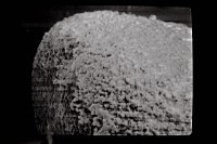 <i>Eisenackitina cf. lagenomorpha</i><br />Ohesaare borehole, 89.30 m, Paadla Stage