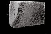<i>Eisenackitina cf. lagenomorpha</i><br />Ohesaare borehole, 19.60 m, Kaugatuma Stage