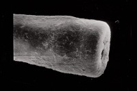 <i>Conochitina cf. linearistriata</i><br />Ruhnu 500 borehole, 333.00 m, Jaagarahu Stage