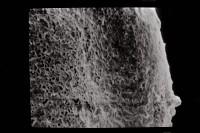 <i>Conochitina aff. lagena</i><br />Ventspils D-3 borehole, 726.00 m, Jaagarahu Stage