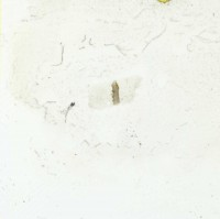 Pachydictya irregularis Bekker, 1921, TUG 1110-113