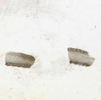 Eridotrypa aedilis (Eichwald, 1855), TUG 1110-134