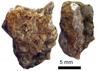 Solenopora spongoides Dybowski, TUG 1140-11