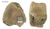 Tetrapoda