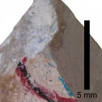 Pomerantsoceras tibia Kröger, 2007, TUG 1227-20