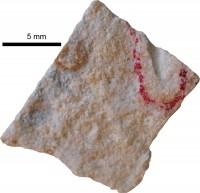 Pomerantsoceras tibia Kröger, 2007, TUG 1227-61