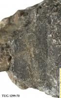 Ptilodictya lanceolata (Goldfuss, 1826), TUG 1299-70