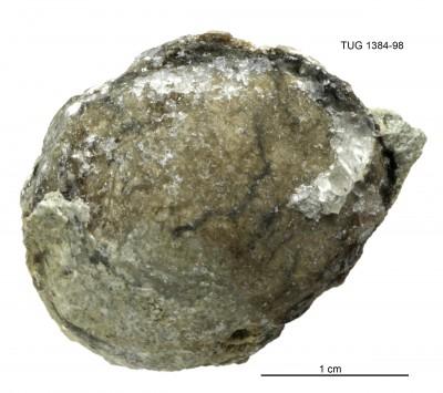 Palaeoheterodonta