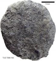 Nematotrypa gracilis Bassler, TUG 1589-184