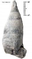 Subulites amphora (Eichwald, 1854), TUG 1589-212