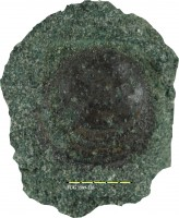 Siphonotreta sp., TUG 1589-276