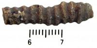 Dittopora colliculata (Eichwald, 1856), TUG 1589-292