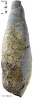 Subulites (Subulites) subula Koken, TUG 1589-339