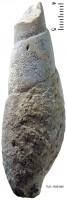 Subulites subula (Koken), TUG 1589-886