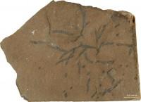 Chondrites isp., TUG 1596-38