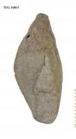 Fusispira ovalis Koken, TUG 1680-5