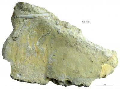 , TUG 1743-1