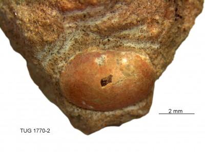 , TUG 1770-2