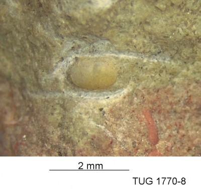 None, TUG 1770-8