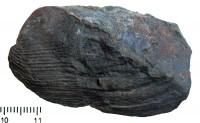 Modiolopsis sp., TUG 439-234